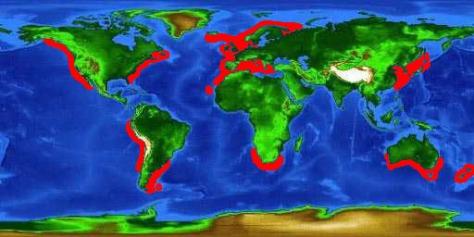 Cetorhinus-maximus-map